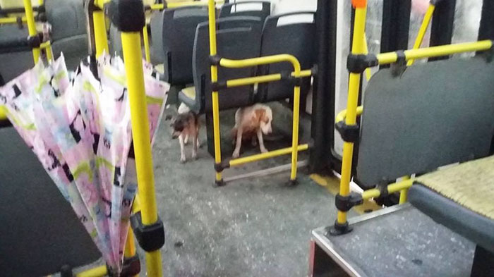 bus-driver-two-stray-dogs-ride-thunderstorm-argentina-3