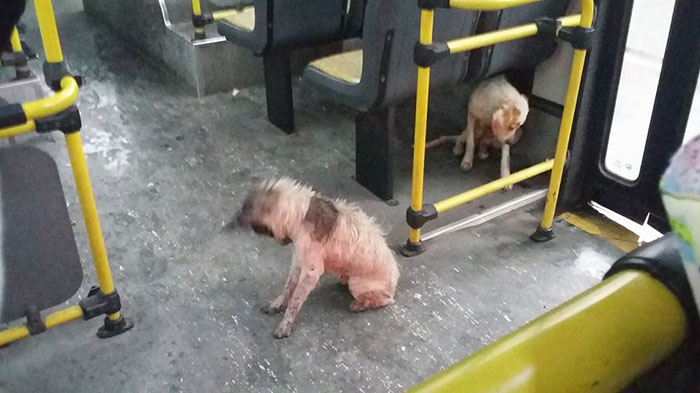 When This Bus Driver Saw Stray Dogs Shivering In The Storm, He Stopped To Do An Amazing Thing