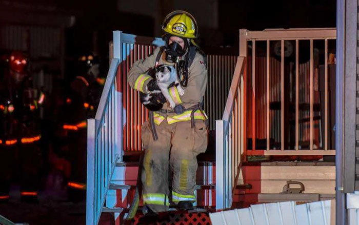 Cat Saves Whole Family From Fire After Biting Owner In The Middle Of Night And Warning Her