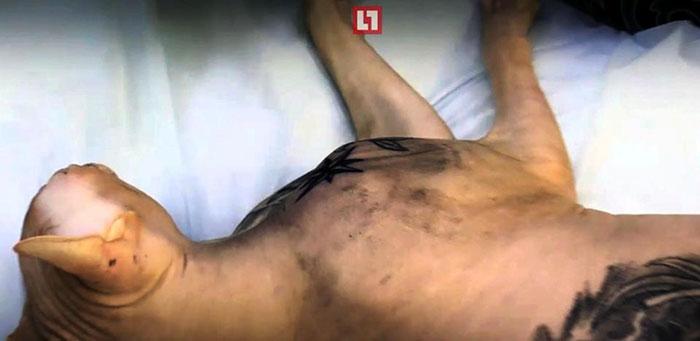 cat-tattoo-gangster-sphynx-aleksandr-russia--2a
