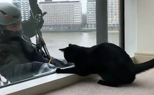 Cat VS Window Cleaners