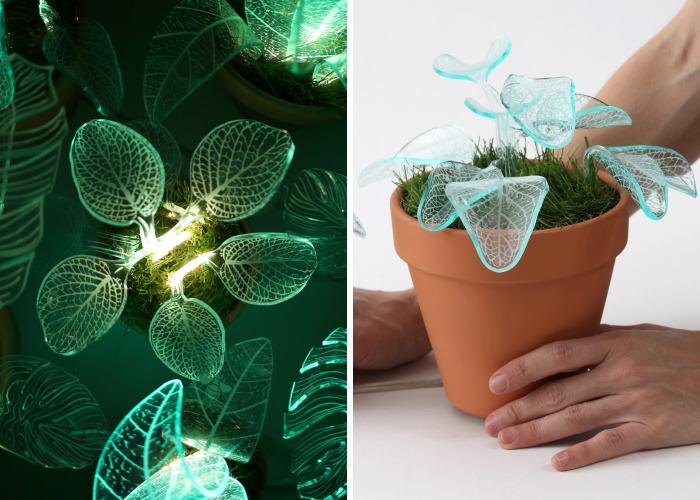 I Make Evergreen Plants That Glow In The Dark