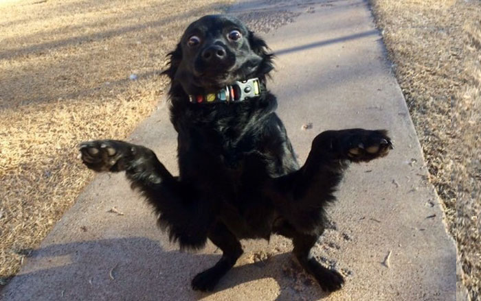 Someone On Facebook Is Trying To Get This Dog Adopted, Here's A Photo They Chose ¯\_(ツ)_/¯