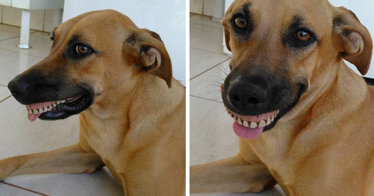 Owner Nearly Died From Laughter After Realizing How His Dog Got His New Smile