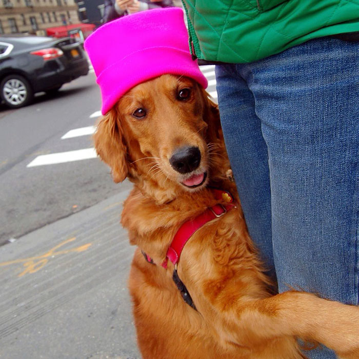 dog-gives-hugs-louboutina-retriever-new-york-15