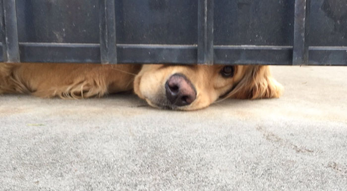 This Dog Waits For His Girl After School Every Day
