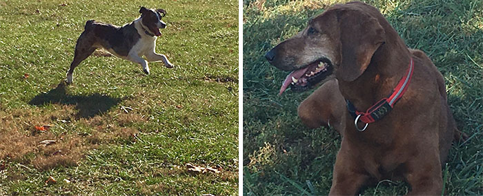 dogs-adopted-together-lucy-sully-1