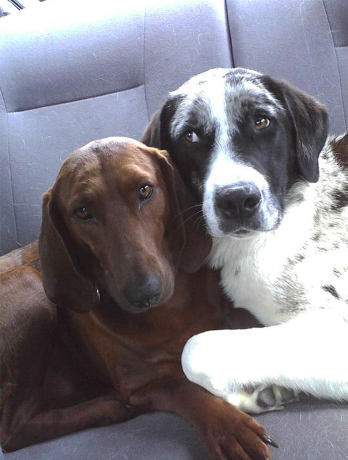 dogs-adopted-together-lucy-sully-7