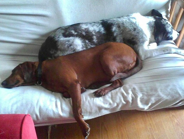 dogs-adopted-together-lucy-sully-8