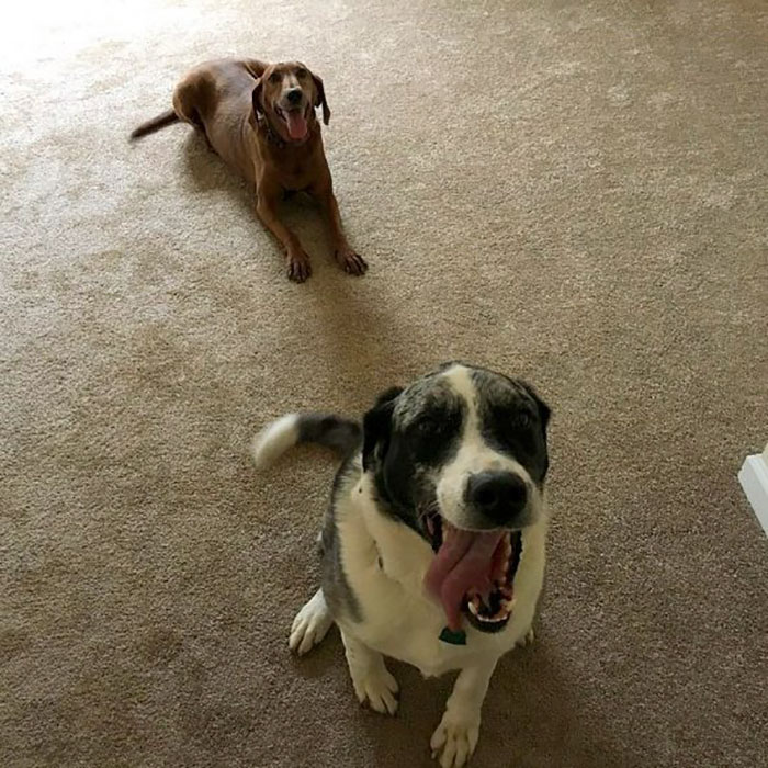 dogs-adopted-together-lucy-sully-9