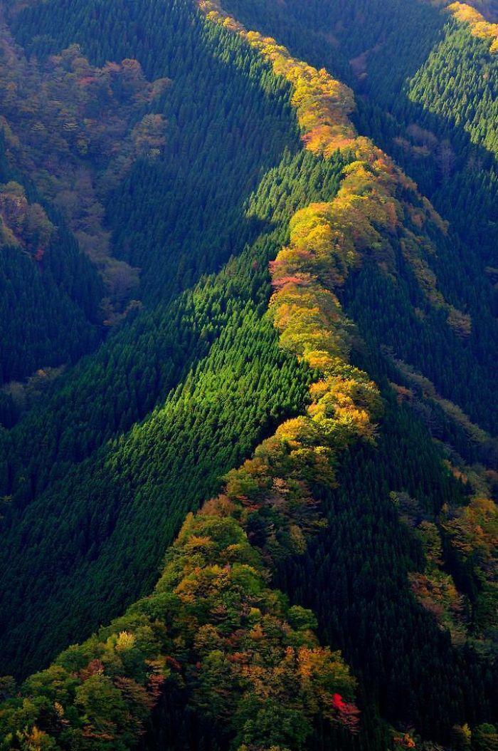 Maple Ridge In Japan