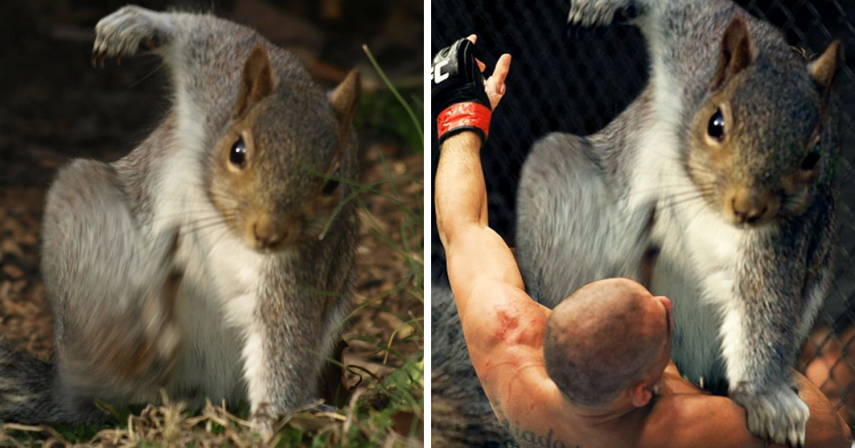 How To Keep A Pet Squirrel