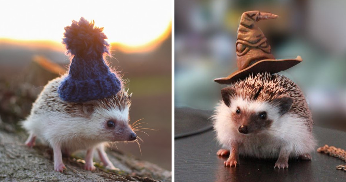 this hedgehog day treat yourself with 47 pictures of