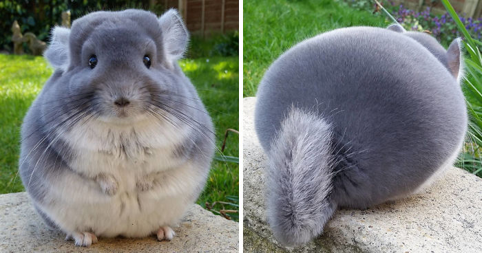 pretty round asses