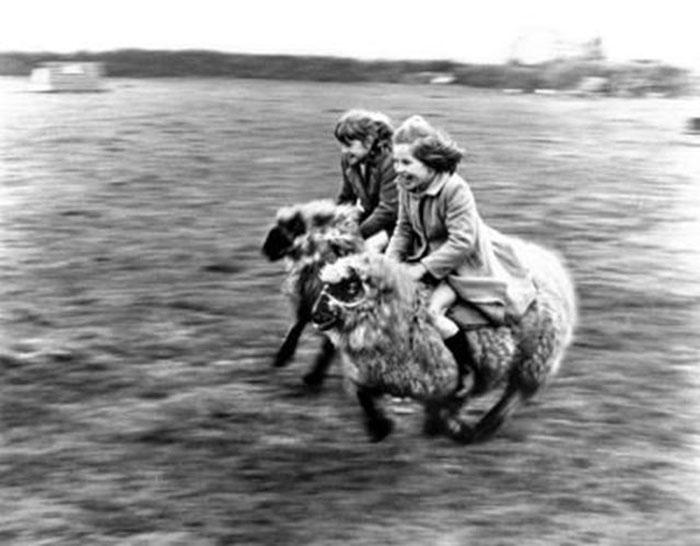 Two Girls Ride Sheep