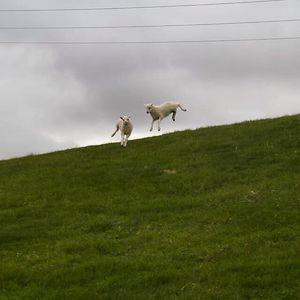 Jumping Skoppa & Skrítla