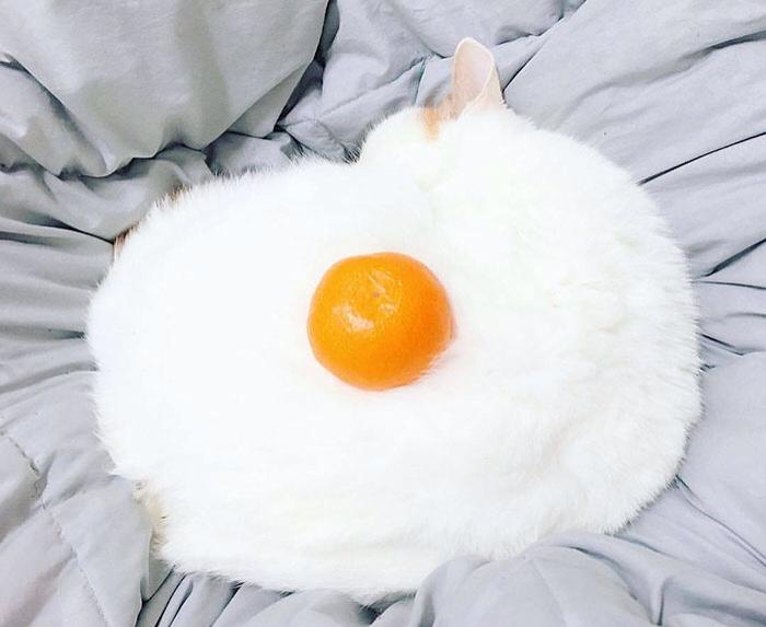 I Made Egg Cat