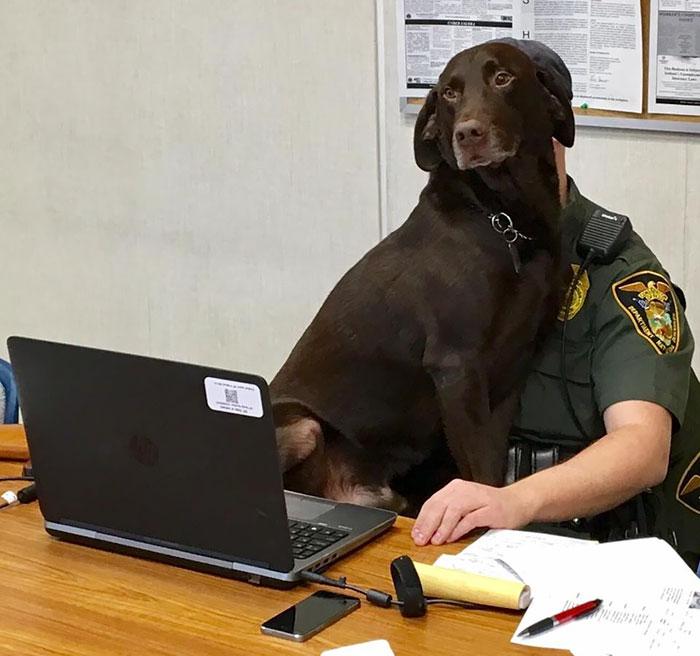 k-9-officer-dog-kissing-photo-kenobi-3