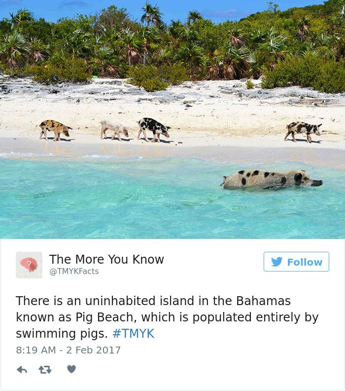 Pig Beach?