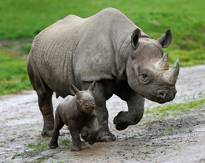 national-park-shoots-people-protects-rhinos-kaziranga-12