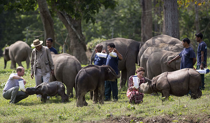 national-park-shoots-people-protects-rhinos-kaziranga-6