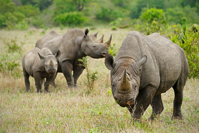 national-park-shoots-people-protects-rhinos-kaziranga-9
