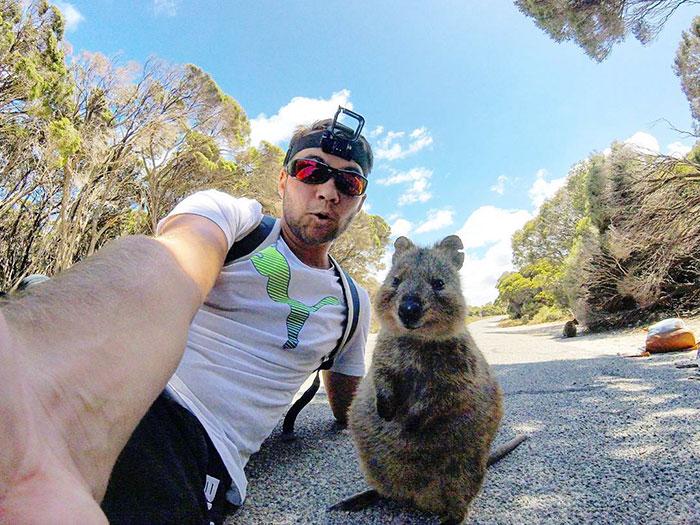 quokka-meets-cyclist-man-australia-1