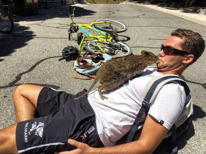 quokka-meets-cyclist-man-australia-4