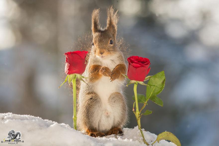 картинка белка с розами раз неделю любой