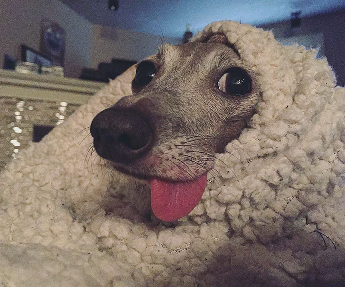 scared-rescue-dog-baby-brother-weezy-14