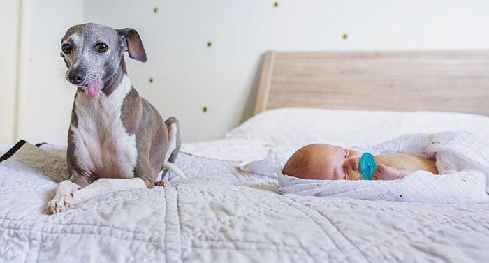 Baby Scared Of Dog Bark