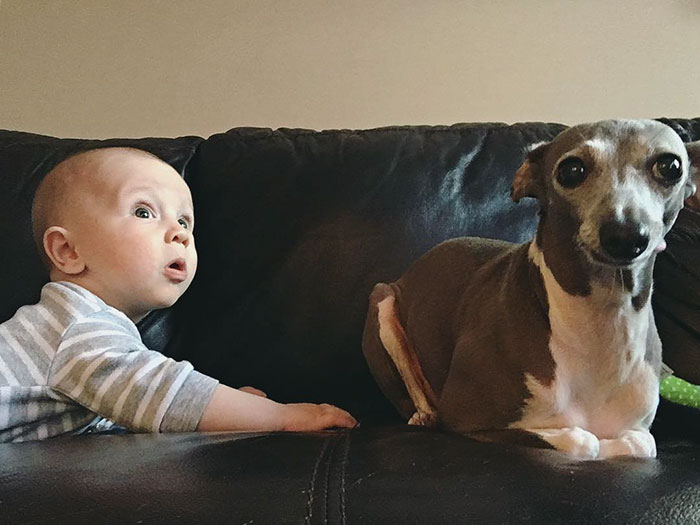 scared-rescue-dog-baby-brother-weezy-36