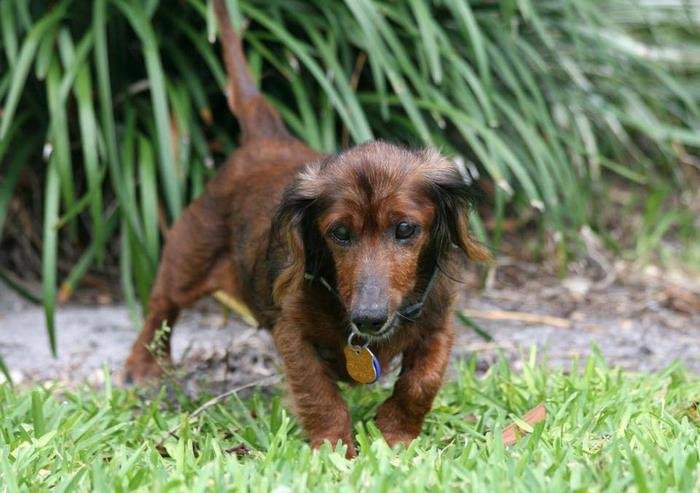senior-rescue-dog-bucket-list-morgan-10