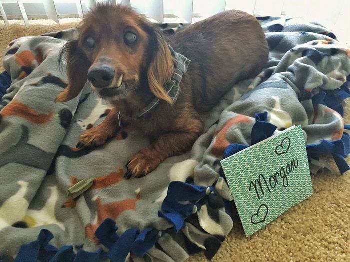 senior-rescue-dog-bucket-list-morgan-12
