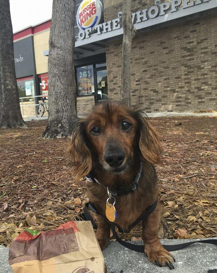 senior-rescue-dog-bucket-list-morgan-14