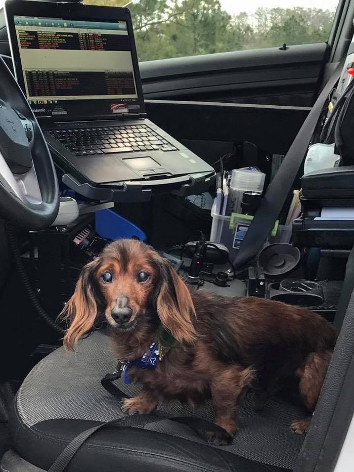 senior-rescue-dog-bucket-list-morgan-2
