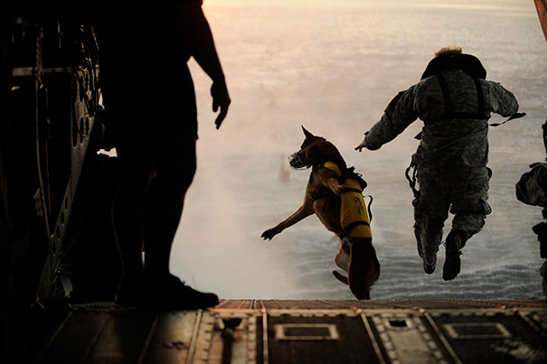Army Soldier And His Military Working Dog Jump Off The Ramp Of A CH-47 Chinook Helicopter