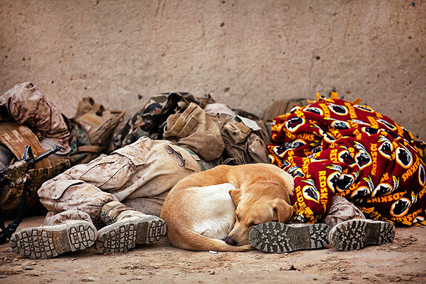 Military Dog Taking A Nap With His Fellow Soldiers