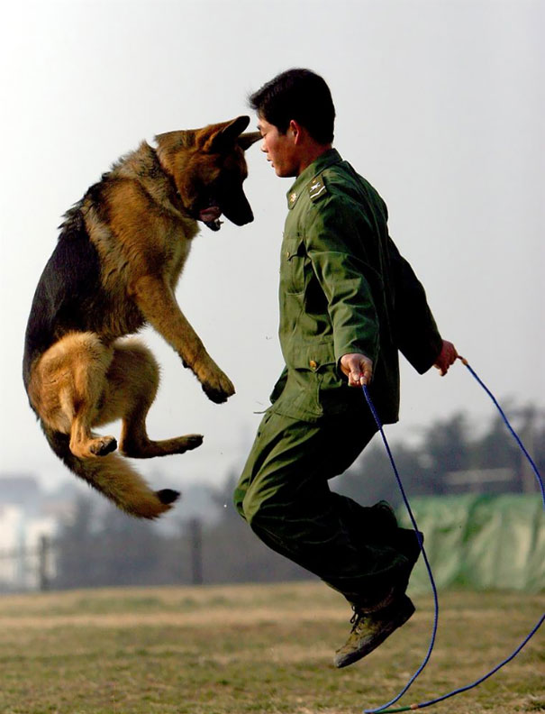 A Police Dog And Its Trainer Practise Skipping At A Police Dog Training Base