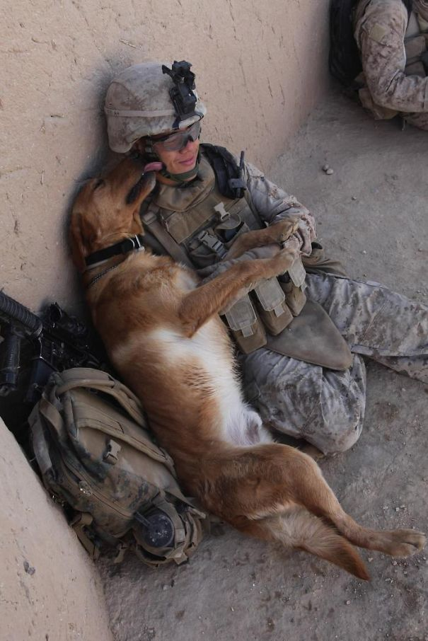 Soldier With His Dog