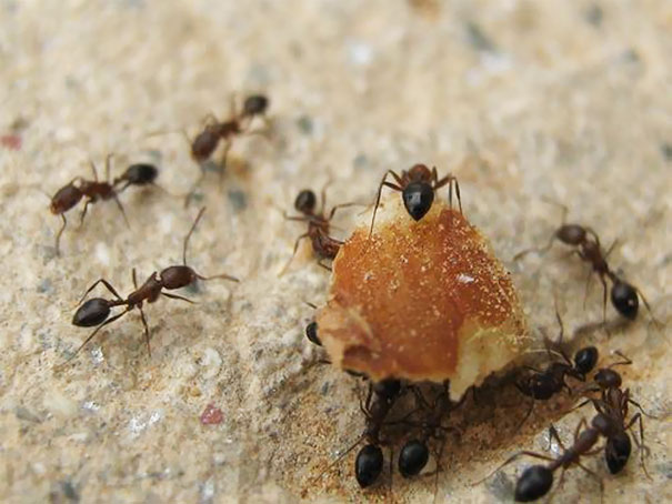 Release Ants Into Your Toaster To Remove Bread Crumbs That Accumulate At The Bottom Which Can Pose A Fire Hazard