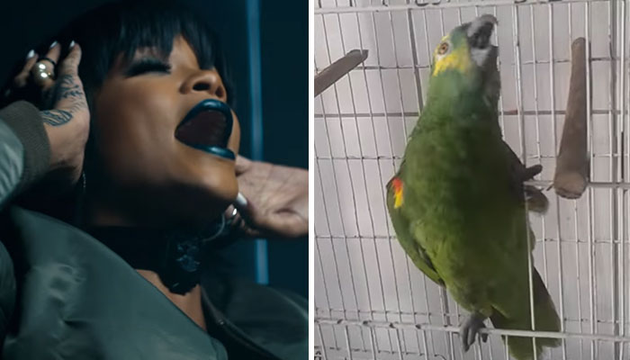 This Parrot Sings Rihanna's 'The Monster,' And People Think It's Better Than Original