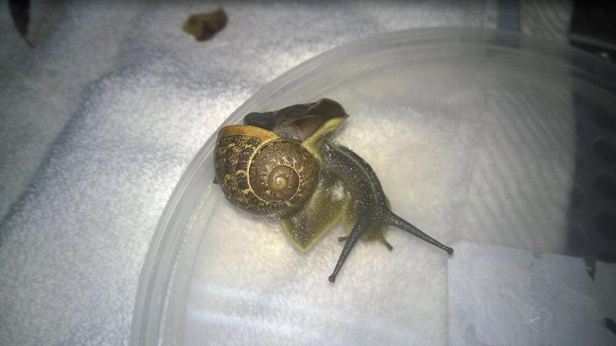 snail-broken-shell-fixed-chevy-tel-aviv-5