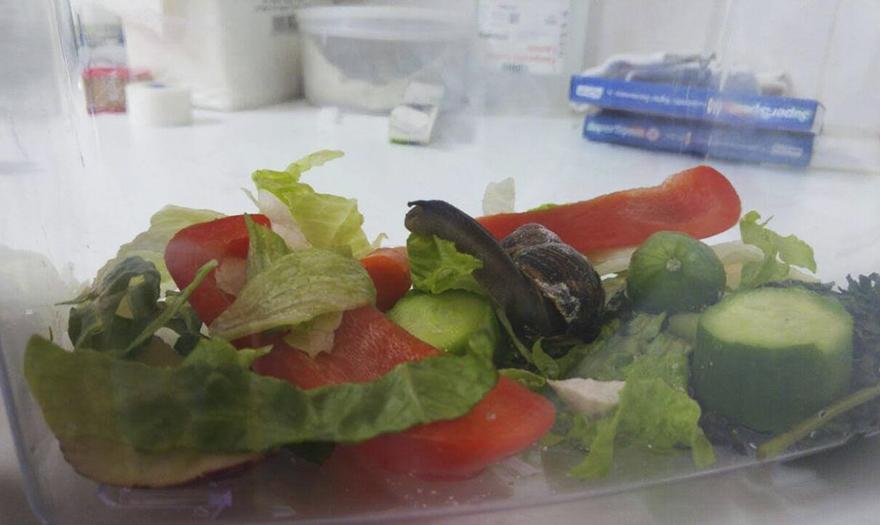 snail-broken-shell-fixed-chevy-tel-aviv-6