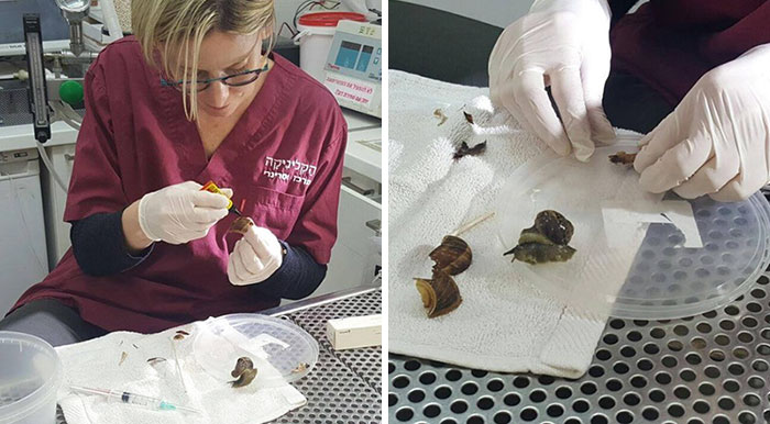 Woman Steps On Snail, Brings Him To Vet To Fix His Shell