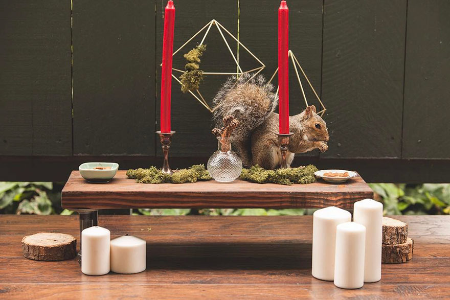 squirrel-parties-ashly-deskins-photography-21