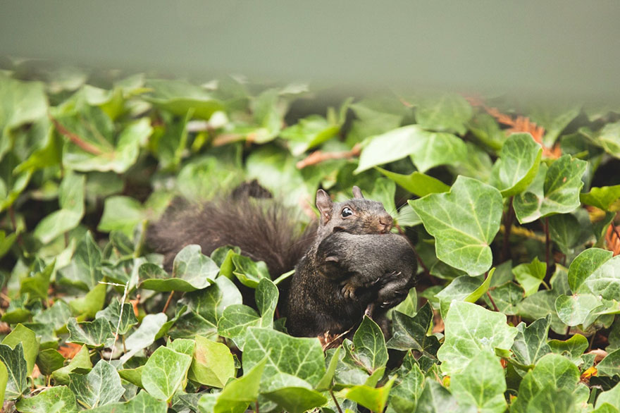 squirrel-parties-ashly-deskins-photography-27
