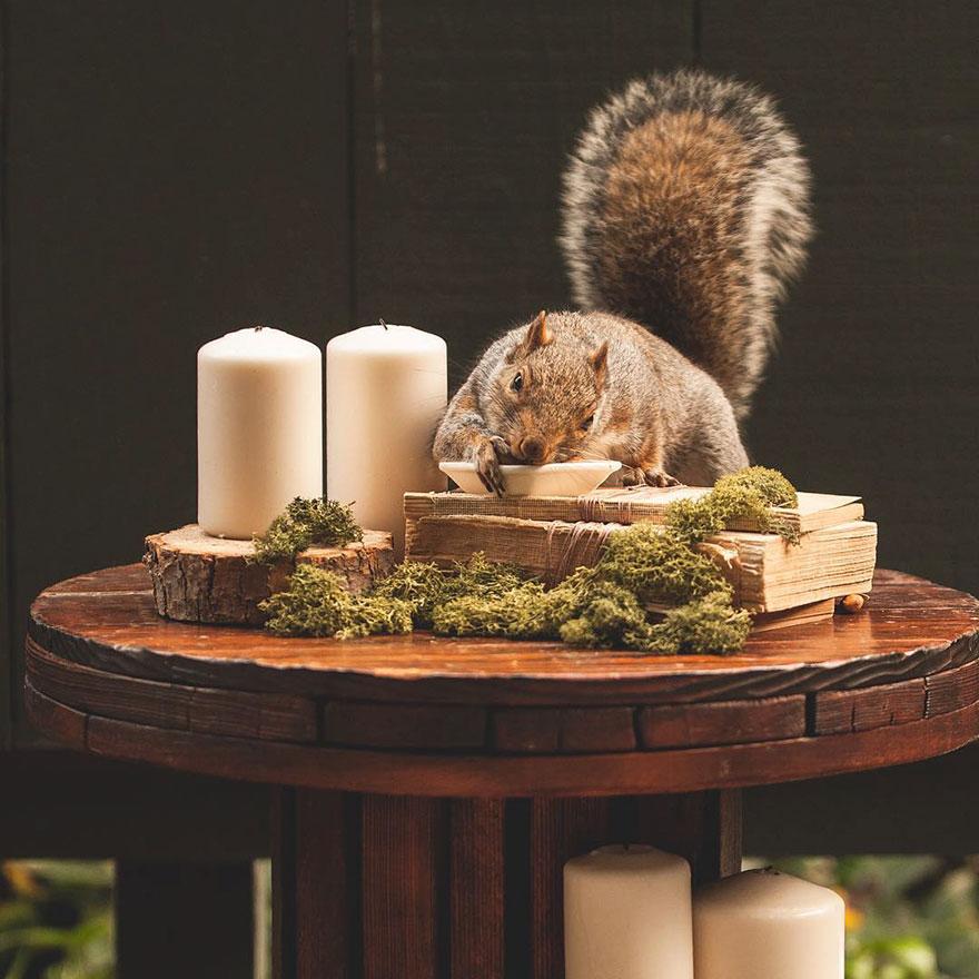 squirrel-parties-ashly-deskins-photography-4
