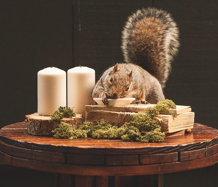This Woman Throws Miniature Parties For Squirrels Who Come To Visit Her