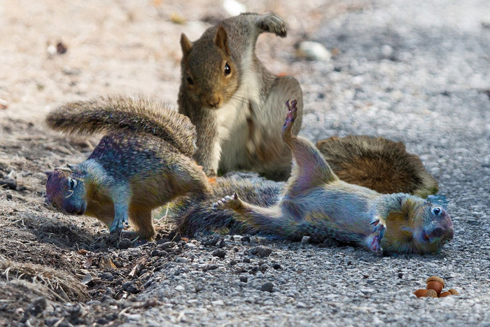 Don't Ever Try To Mess With My Nuts Again!!
